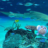海のいきものとニョロモ、マーイーカ【ポケモンGOAR写真】サンシャイン水族館