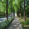 健康散歩-4