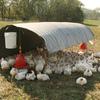 吉川元農相に500万円-鶏卵業者と動物福祉