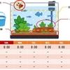 頑固なガラス面の苔 お掃除方法・対策(アクアリウム初心者向け)