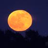 十六夜の柑月