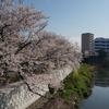 桜の花,イチョウの葉