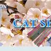 猫から教わるアドラー心理学?