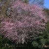 早春のつくば植物園「みごろの植物」