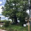 旧街道の旅人たちを見守り続けた 二つ塚の道標(秦野市)