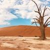 【ナミビア②】死の沼デッドフレイは、まるで世界の裏側に迷い込んだよう