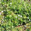 野に咲く草花が春の訪れを感じさせてくれる