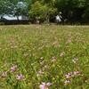 森の工房AMAの庭の花