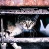 【詩・ポエム】泥猫のマーチ