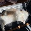 ノル猫ラテちゃんの日向ぼっこ♫