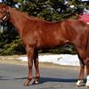 【POG】イタリアンレッドの第3子・バレーノロッソはあか抜けた馬体