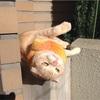 「ボブという名の猫 幸せのハイタッチ」を観てきました