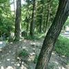 私のおすすめトレーニング場所、鶴見緑地公園です