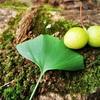 【おすすめ記事一覧】~自然が好き~森林浴 森林セラピー 自然観察 自然カフェ 自然撮影を楽しもう!