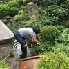 土屋薬局の近況報告と池の掃除をしました!