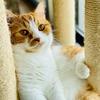 るるちゃん写真集vol.9「初夏の日の愛猫」