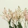大人気の小花【アスチルベ】のドライフラワー