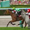 2017 8/20 札幌記念 出走予定馬の分析と傾向