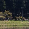 岐阜県 モネの池ってしってますか⁉️