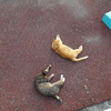 7月後半の #ねこ #cat #猫 その2