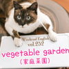 【週末英語#252】畑は英語で「field」だけど、家庭菜園は「vegetable garden」と言うよ。
