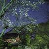 氏神様で桜の開花@2020