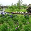 花めぐり:水郷佐原水生植物園の花菖蒲