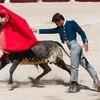 闘牛は何で赤い布に興奮するの?