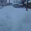 ほんとうに大雪だ!