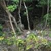 【日本一周チャリ旅】Vol.14  森の奥で女性の声が!?まさか…