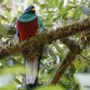 コスタリカ 世界一美しい鳥ケツァールに出会える場所