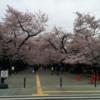 お花見(大岡山)