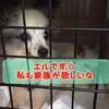 【里親募集・エルちゃん】台風被害に合われた動物愛護団体エンジェルズより