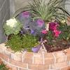 冬の花を植える