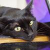 今日の黒猫モモ&白黒猫ナナの動画ー840