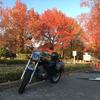 秋らしい写真が欲しくて