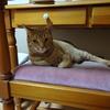 4泊5日の猫との蜜月の暮らしを終えてみれば
