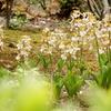 4月下旬の殿ヶ谷戸庭園に行ってきました