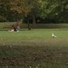 公園でまったり