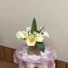 季節は菜の花からチューリップに!